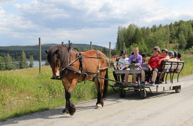 PÅ TUR: I hest og kjerre - mer sommeridyllisk kan man neppe få det!