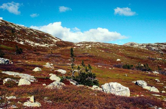Blefjell, Nordstul, Sigridsbu