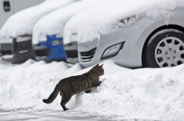 Illustrasjonsfoto: AP Photo/Alik Keplicz