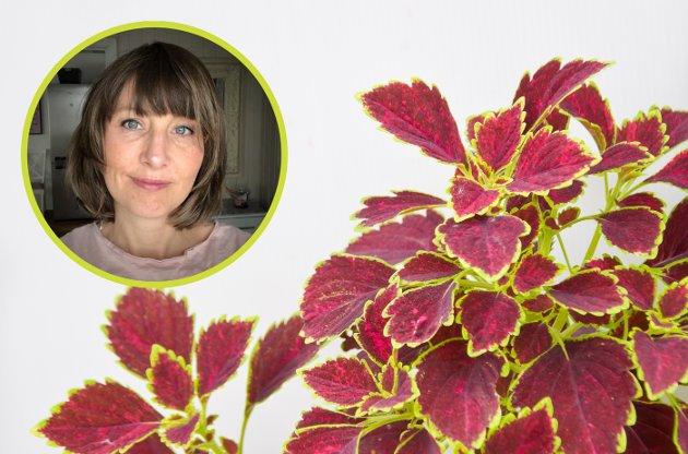 GRØNNPLANTER: Lofotpostens Ingvil Valberg fikk dilla på grønnplanter under korona-perioden i vår. Hun trivdes god i planteforum på Facebook helt til noen mente hennes favorittplante var stygg...