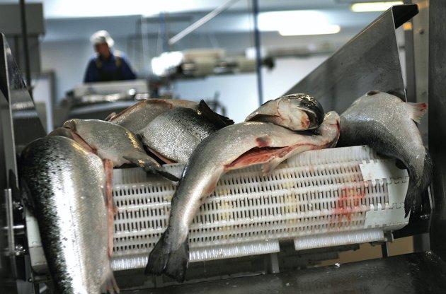 Ikke bare fisk: En rekke prosjekter gir oss muligheten til å konkurrere internasjonalt. foto: scanpi