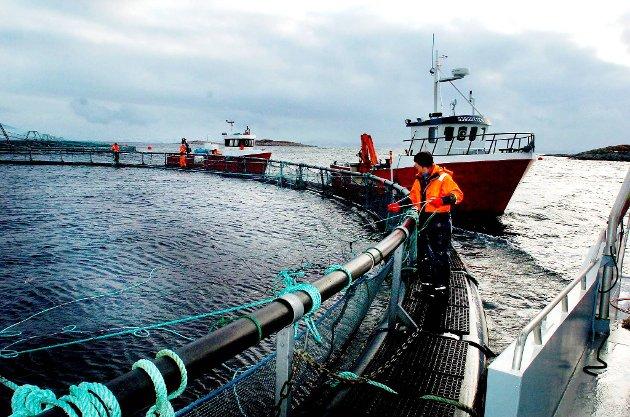 Vi har sjømatnæringen som har Europa som hovedmarked og som kan sende varer uten stans ved grensene direkte til kunder på kontinentet takket være det felles veterinærregelverket, skriver Elin Agdestein (H) som understreker viktigheten av EØS-avtalen.