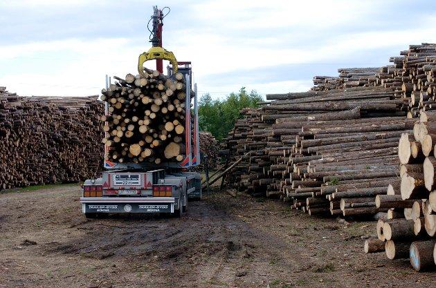Arbeidet med å lokalisere ny tømmerhavn er i gang.