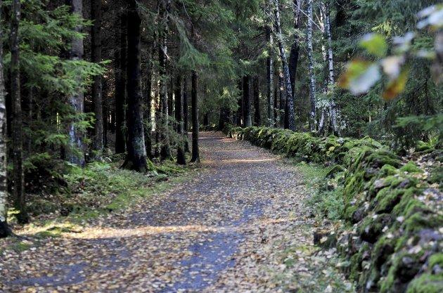 OMSTRIDT: Et prosjekt med 80 nye boliger i skogen ved Torød ble stanset av kommuneplanutvalget på Nøtterøy i 2015. Nå har investor Kristian Lundkvist spilt området inn igjen i forbindelse med at Færders kommuneplan skal opp til ny behandling.