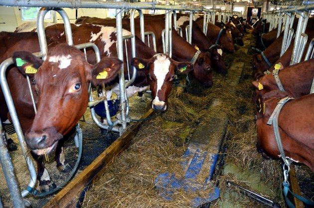 Jordbruket: – Jeg er oppriktig bekymra for framtida i landbruket. Det pågår et generasjonsskifte i næringa, skriver Marit K. Strand. Illustrasjonsfoto