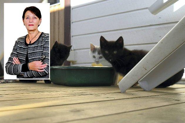 Det er verken nødvendig eller ønskelig å gi kattene ni liv.