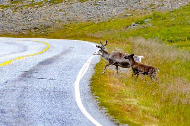 Ødeleggende?: At reineiere på denne måten bidrar til å avfolke Finnmark, er så sin sak., skriver artikkelforfatter.