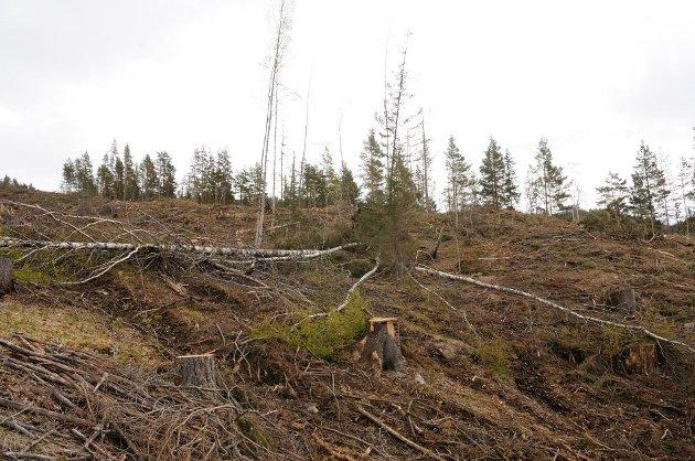 Slik ser det ut når skognæringa tar hensyn til trua arter.