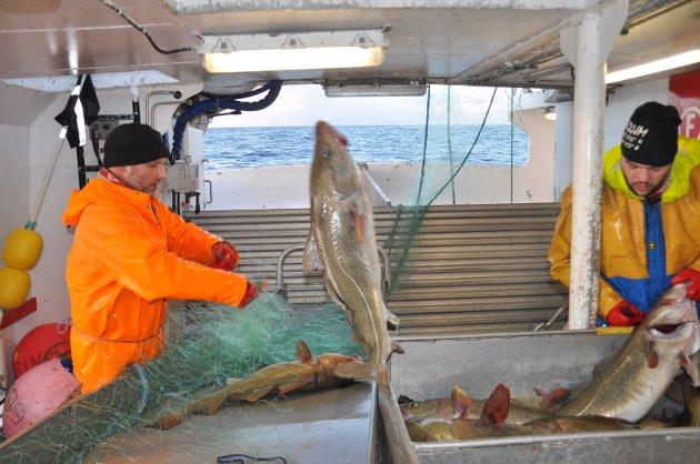 """Lofotposten fikk være med Morten, Bjørn Tore og Tor Petter på garnbåten """"Eggumsværing"""" på et sjyvær på Yttersia. Resultatet etter 70 garn ble 4700 kilo skrei, sløyd vekt. Her kan du se hvordan  livet arter seg om bord."""