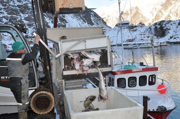 """OPPDATERT: 8.mars: Her finner du bilder fra livet på kaia rundt om i Lofoten. SUND: Johannes losser """"Ny-Kvikk"""""""