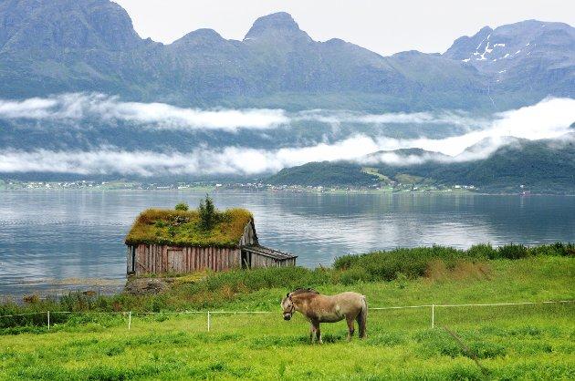 Ibestad er en av mange nordnorske kommuner som har mye idyll og lite folk. Siden 1980 har innbyggertallet blitt halvert.