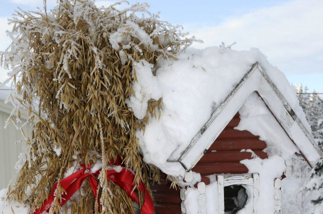Snødekt jul: I denne spalten forteller Linn Tveiten Eken om minner fra sin barndoms jul med masse snø på Krøderen.