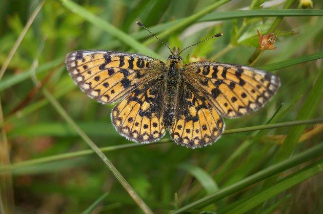 Nydelig sommerfugl.