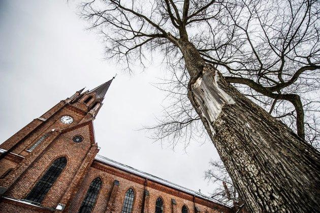 Truet «skulptur»: Denne almen i Kirkeparken er siste eksempel på gammelt tre i Fredrikstad som det er bestemt å felle, men som Jan Ingar Båtvik håper å kunne bevare for en naturlig aldringsprosess. Han vil at slike trær skal betraktes som en skulptur.