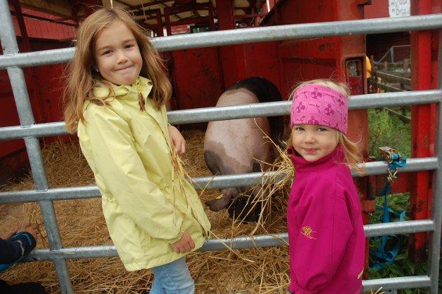 GRIS: Marie og Astrid Storløkken synes det var interessant å se på grisene.