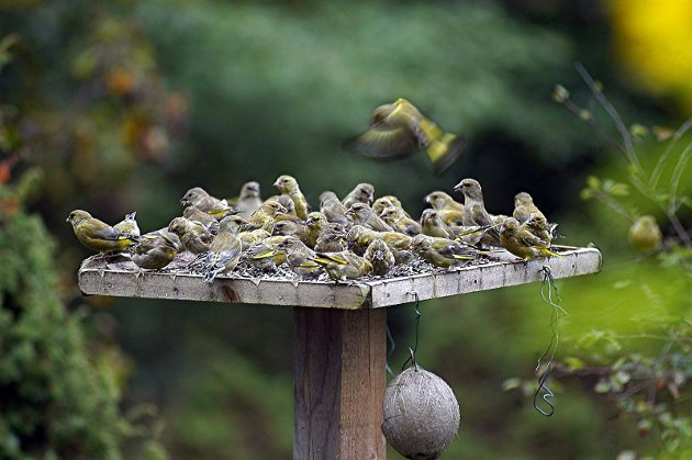 Småfugler: Bjørn Andersen skriver om sitt nære forhold til småfuglene om våren i dagens Signert. Illustrasjonsfoto: Trond Folckersahm, ANB-arkiv