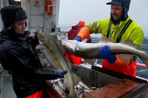 T for torsk -  den viktigste arten i norsk fiskerinæring. Analyser av handelsstatistikken viser at torsken etter nesten 7 år med sammenhengende vekst, møter de største utfordringene siden krisen i verdensøkonomien i 2003.