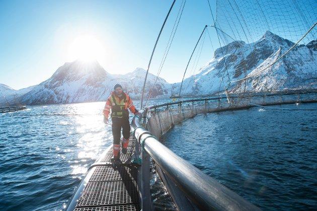 Vi har sjansen til å bidra til et nytt industrieventyr for sjømatnæringa gjennom å støtte utviklinga av norsk fôr til havbruksnæringen, skriver Arbeiderpartiets Cecilie Myrseth.