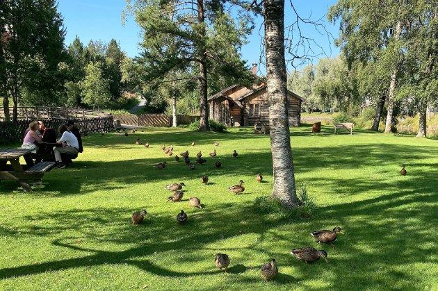 IDYLL: – Så skjedde noe overraskende. Da fugleburene var fjernet fikk vi øynene opp for hvor fantastisk flott parken er og hvilke muligheter den frembyr, skriver Raufoss Rotaryklubb om oppryddingen av den tidligere Fugleparken.