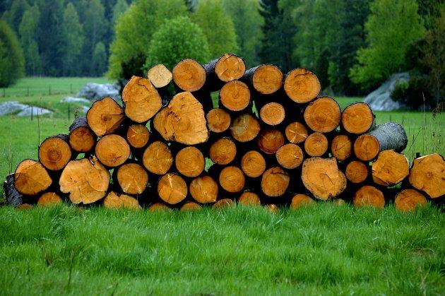 KRAV: – Vi trenger klimagasskrav i norske bygg, så etterspørselen etter trevirke øker, skriver artikkelforfatterne.