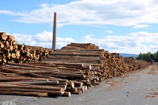 – Vi mener alvor når vi sier at vi må satse på jord og skog, skriver Knut Storberget og Lise Christoffersen.