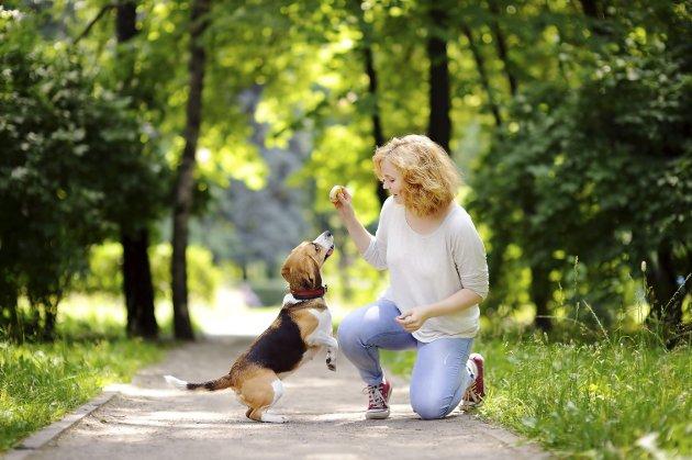 Hva har menn og hunder felles? De liker å jage. Kast ballen og stol på at de kommer tilbake for å leke mer