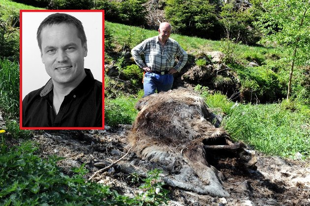Bonde Håvard Fjære får klage på at det ligger døde dyr i området og at lam breker høyt. Det er grunn til bekymring, skriver ansvarlig redaktør og daglig leder Steinar Ulrichsen.