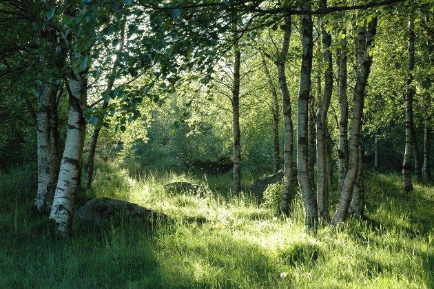 Fra Sørbø på Ganddal, der det nå er boligfelt