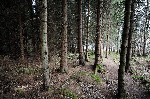 Skog: Deler av produktiv skog er vernet. ¬