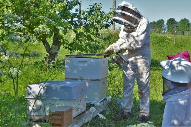 BEROLIGENDE: Ved å blåse litt røyk inn til biene før han åpner kuben, gjør Hallgeir Øfstaas at biene går i brannberedskap, noe som igjen gjør at det er mindre sannsynlighet for at de stikker.