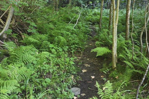 Gjengrodd: Knut Frognes tar til orde for ønsker at et flott turområde skal bli bedre tilgjengelig for alle.