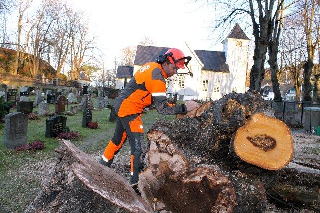 Arborist Tore Skoglund