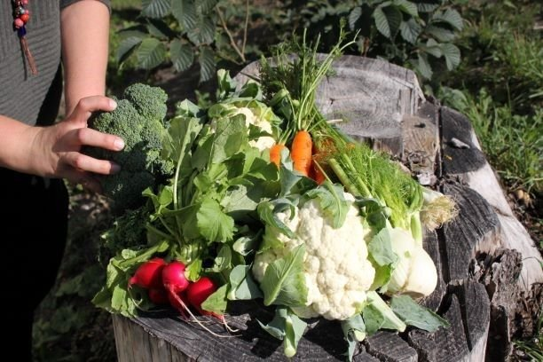 Kortreiste grønnsaker