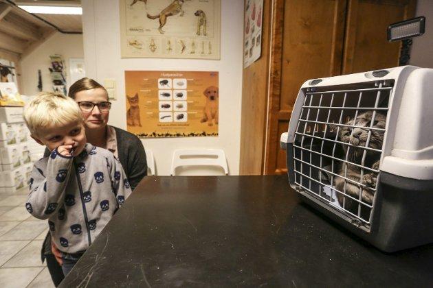 Pus i bur: Isak (5) og mamma Kathrine ser litt bekymret bort på pusen «Lulu» i buret. Den har akkurat fått bedøvelsessprøyte.
