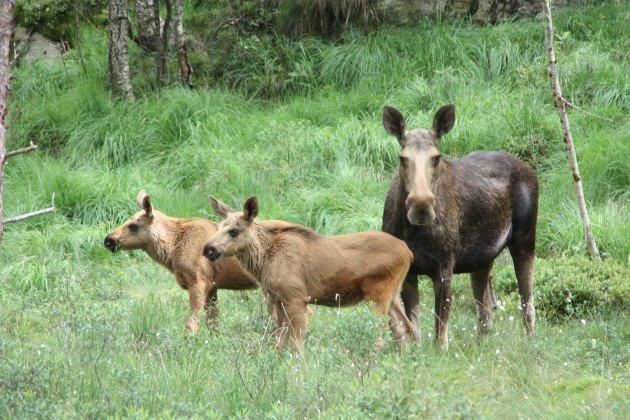 YTRING: Denne dyrearten har det blitt mindre og mindre av de seneste årene i vindmølleparkområdet.