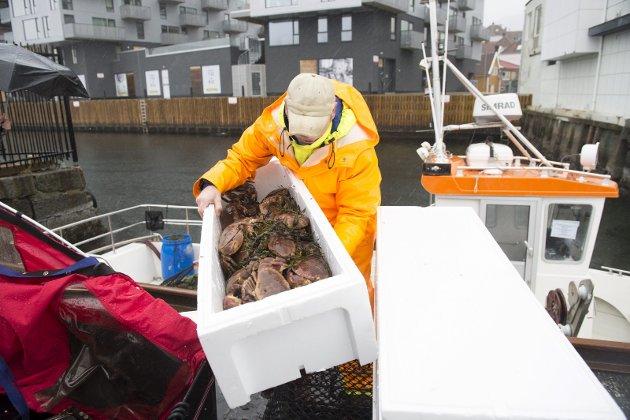 Erling etterlyser mer forutsigbarhet fra fiskeselgerne. ILLUSTRASJONSFOTO: Magne Turøy
