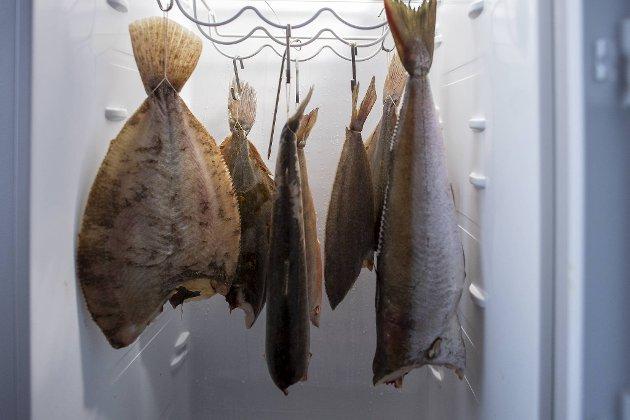 Raymond Grimstad har flere sorter fisk hengende til modning hjemme i kjøleskapet. Det gir en spesiell konsistens og smak når kokken tilbereder rettene.