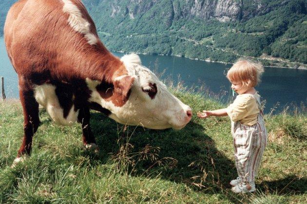 NORSK MAT: 92 prosent synes Norge bør opprettholde de gårdene vi har.