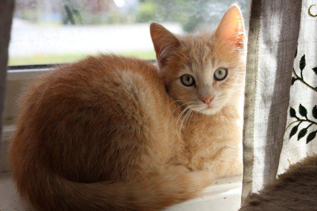Hjemløse katter Modum