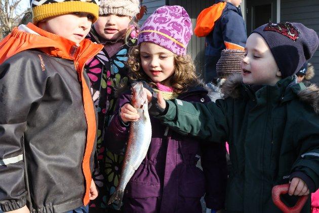 SILDEFLEKKING: Tysdag lærte barna i Sørstrand maritime FUS barnehage om sildeflekking. | Her er Lilly (4½) og Emil (4½).