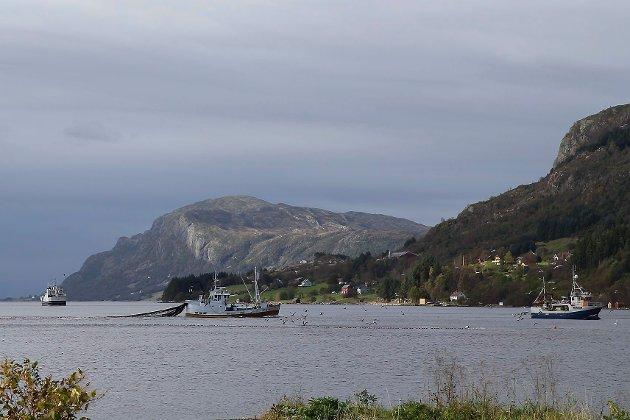 STOR ELLER LITEN? Artikkelforfattaren er redd for at evige kvotar vil øydelegge for små lokalsamfunn knytt til fiskeri.
