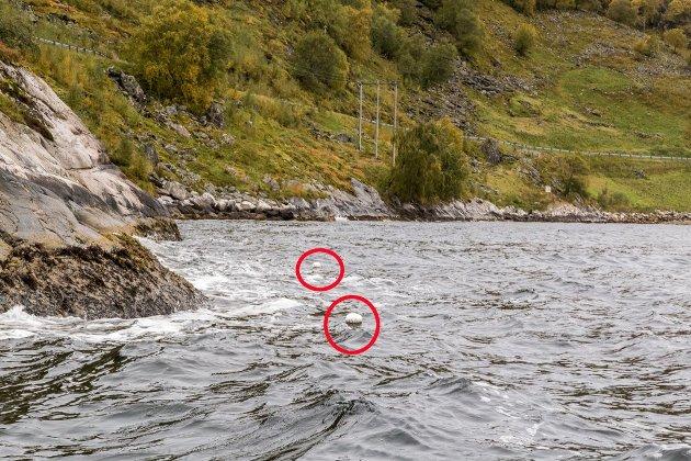 Ulovleg teinefiske fleire stadar i hummarfredningssona i Sognefjorden.
