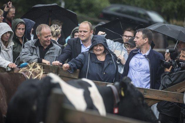 KRISE: Det er provoserende at Regjeringen ikke i større grad kommer kriserammede bønder til unnsetning.Foto: Scanpix