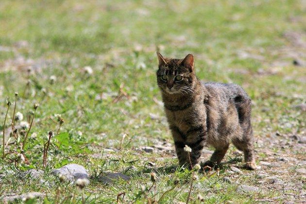 Har du katt er det en rekke ting du kan gjøre for å forhindre at den fanger fugler.