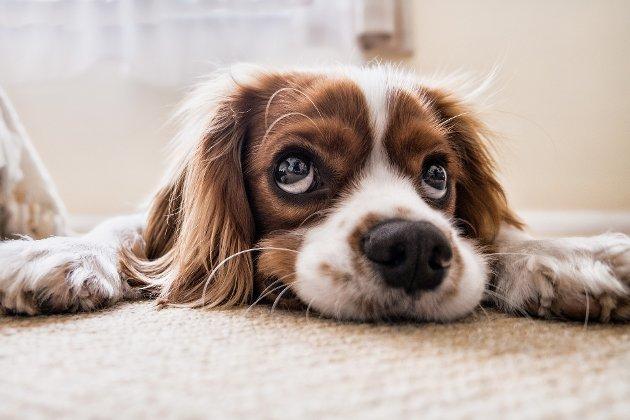 Menneskets beste venn: Hunden er rettsløs, mener Vigdis Hellerud i dette leserinnlegget.