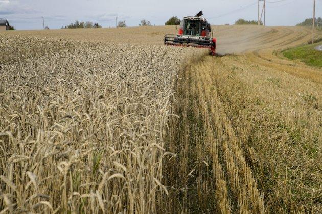 KORN: Vi må snarest, i likhet med en rekke andre land, innføre kornlagring til bruk i usikre tider, skriver Dagfinn Torstveit. 8 8Ill.foto: NTB SCANPIX