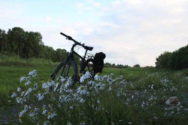 Bilde ble tatt i Herøy. Foto: Zorica Tomanovic, 8850 Herøy