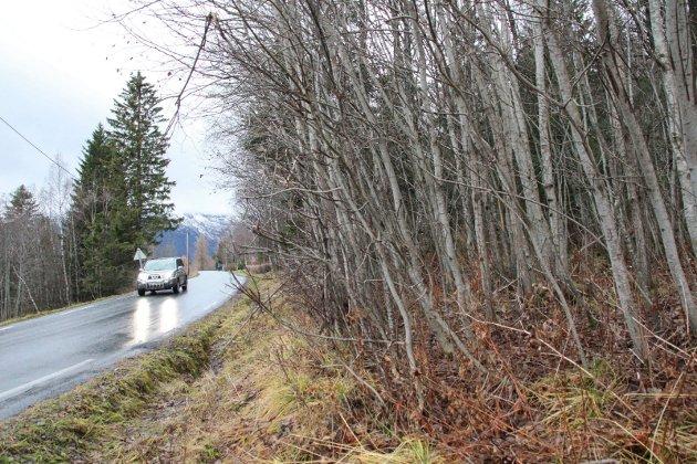 ETTERSLEP: - Anslagsvis 15.000 kilometer av de 44.000 kilometerne med fylkesvei i landet har dårlig eller svært dårlig dekketilstand og estimert har en oppgradering av fylkesveiene til tilfredsstillende standard en kostnad på mellom 60 og 90 milliarder, påpeker skribeten. Bildet viser Fylkesvei 7324 (tidligere 249) som går mellom Hamarheim og Sjåmoen.