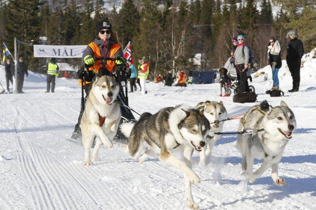 Herringen Trail på Sjåmoen ble like vellykkett som vanlig. 18 deltakere var ikke så mange som i fjor, men 15 minusgrader og sol gjorde løpet til en opplevelse. Her er det Victora Ryytty fra Gällivare som legger ut fra start med ivrige hunder.