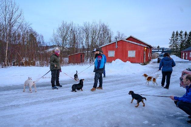 Tirsdager møtes nye og gamle to og firbente medlemmer av Vefsn hundeklubb på det nedlagte militærområdet på Skjervengan. Her trener de på sosialisering og deltakelse på utstilling.